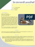 Canard Souchet - Fiche péda Eau & Rivières de Bretagne