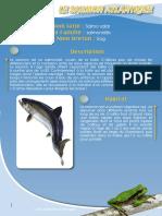 Saumon  - Fiche péda Eau & Rivières de Bretagne