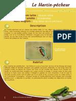 Martin pêcheur - Fiche péda Eau & Rivières de Bretagne