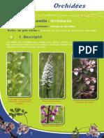 Orchidées - Fiche péda Eau & Rivières de Bretagne