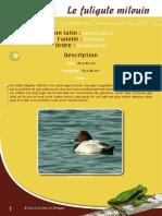 Fuligule milouin - Fiche péda Eau & Rivières de Bretagne
