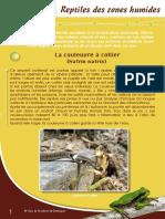Reptiles des zones humides - Fiche péda Eau & Rivières de Bretagne