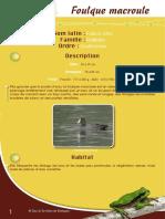 Foulque macroule - Fiche péda Eau & Rivières de Bretagne
