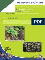 Oenanthe safranée - Fiche péda Eau & Rivières de Bretagne