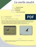 Courlis cendré - Fiche péda Eau & Rivières de Bretagne