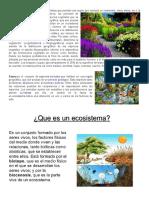 Flora.docx