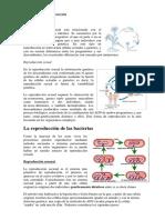 Mecanismos dE reproducción