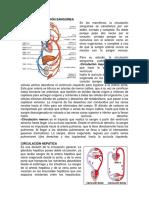Tipos de Circulación Sanguínea