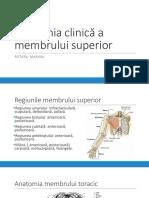 Anatomia clinica a membrului superior prezentare.pptx