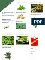 Plantas Medicinales Del Perù