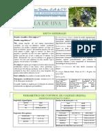 semilla de uva.pdf