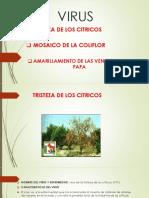 EXPO DE VIRUS FITO.pptx