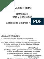 2 Subdivisión Gimnospermas