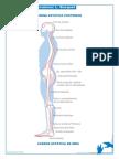 Cadenas musculares- Busquet.pdf