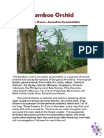 Bamboo Orchid.docx