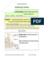 GgiaGeomorf.pdf