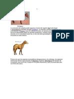 Evolución del caballo.docx