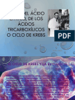 Ciclo Del Acido Cítrico o Ciclo de Krebs