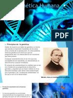 Genética Humana Dp