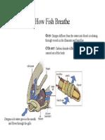 How Fish Breathe