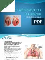 Sistema Cardiovascular Corazón