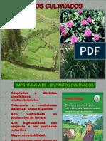 Caracteristicas de Pastos Cultivados15