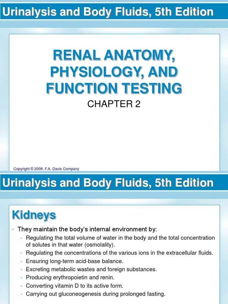 Renal Function Kidney Angiotensin