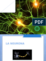 Completo Documento De neuronas