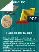 Biología Celular [III-IV Unidad].pdf