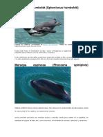 Mamiferos Del Mar Peruano