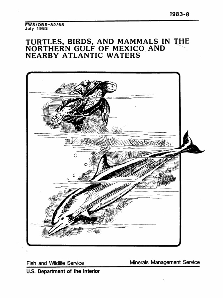 Turtles, Birds, And Mammals in the Northern Gulf Mexico   Gulf Of