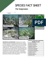 Seagrass s Fs