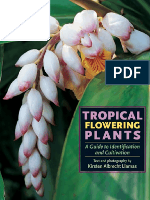"Kalanchoe longiflora coccinea succulent 1 rooted stem 2-6/"" tall"