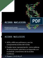Ac Nucleicos
