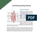anatomfis jantung2