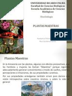 plantas maestras