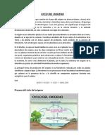 Ciclo-del-oxigeno.docx