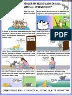 Presentacion Gato Nuevo en Casa