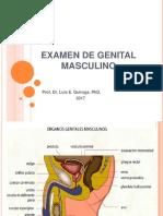 Examen de Genital Masculino 1