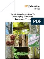 Tree Id Guide