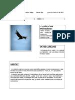 Documento1 CONDOR