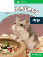 Hamsters (cuento)