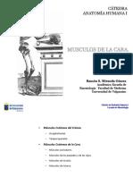 Miología de La Cara Anatomia