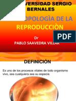 9º ANTR-  REPRODUCCIÒN-ACT.ppt