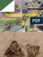 62 Gestion Integrada de Plagas en Brasicas Amonserrat 1416228038