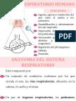 Tema 2 Sistema Respiratorio