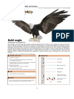 Eagle Papercraft