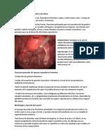 Control Endocrino de Ovario y de Útero Parte 1