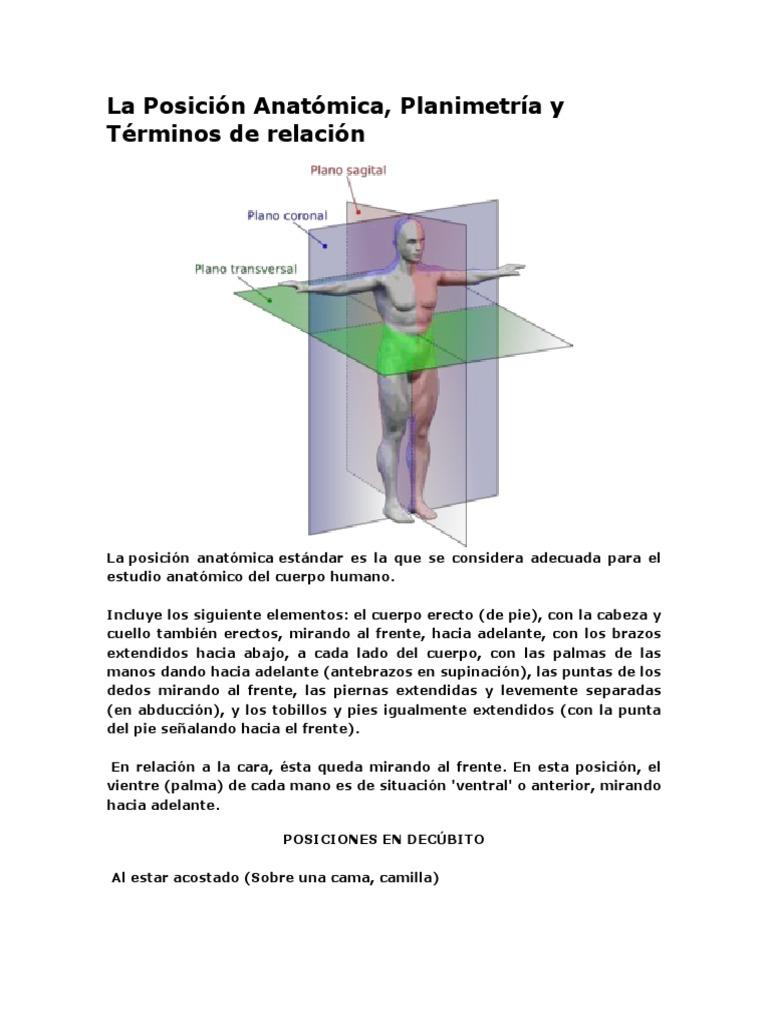 Planimetria Del Cuerpo Humano