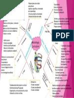 Mapa de Metodologia Curriculares